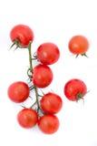 Mazzo di pomodori freschi con le gocce dell'acqua Fotografie Stock Libere da Diritti