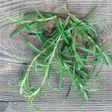Mazzo di ramoscelli freschi dei rosmarini su fondo di legno grigio, quadrato fotografia stock