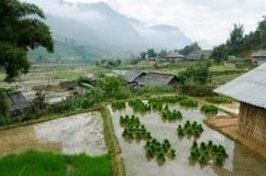 Mazzo di riso Fotografia Stock Libera da Diritti