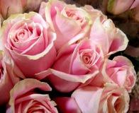 Rose Bouquet Fotografia Stock Libera da Diritti