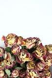 Mazzo di rosa appassito Fotografie Stock