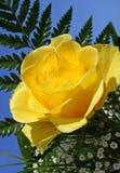 Mazzo di rosa di colore giallo Fotografia Stock