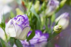 Mazzo di rosa di porpora per la sposa il suo giorno speciale fotografia stock