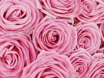 Mazzo di rose dentellare fotografia stock