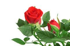 Mazzo di rose rosa in vaso da fiori. Fotografia Stock