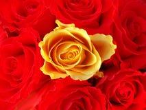 Mazzo di rose rosse con un singolo colore giallo uno fotografia stock libera da diritti