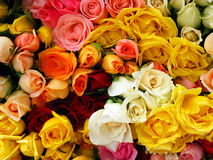 Mazzo di rose variopinte Fotografia Stock