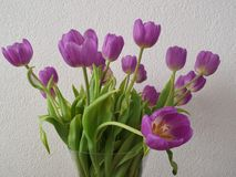 Mazzo di tulipani Fotografie Stock Libere da Diritti