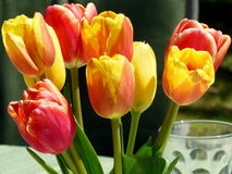 Mazzo di tulipani Immagini Stock
