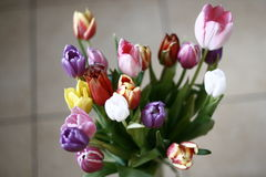 Mazzo di tulipani Immagine Stock Libera da Diritti