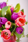 Mazzo di tulipani Fotografie Stock