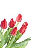 Mazzo di tulipani rossi Fotografia Stock