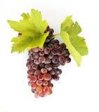 Mazzo di uva Immagine Stock
