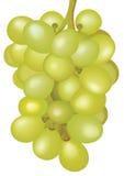 Mazzo di uva. Immagini Stock