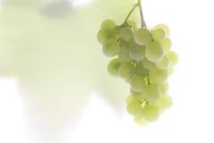 Mazzo di uva Fotografia Stock