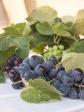 Mazzo di uva americana, anche chiamato uva della fragola, appena ha Immagini Stock