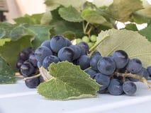 Mazzo di uva americana, anche chiamato uva della fragola, appena ha Fotografia Stock
