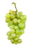 Mazzo di uva bianca con le gocce di acqua Immagine Stock