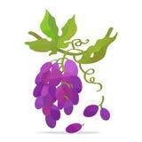 Mazzo di uva con le foglie royalty illustrazione gratis