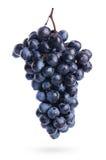 Mazzo di uva con le gocce dell'acqua, isolato immagine stock
