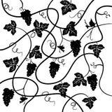 Mazzo di uva, fondo della pianta Immagini Stock
