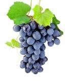 Mazzo di uva isolata su un fondo bianco Fotografia Stock