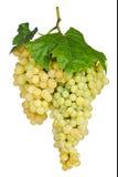 Mazzo di uva matura isolata su bianco immagine stock libera da diritti