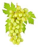 Mazzo di uva matura su un fondo bianco Fotografia Stock Libera da Diritti