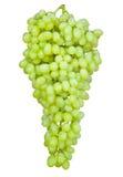 Mazzo di uva matura su un fondo bianco Immagini Stock