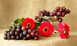 Mazzo di uva matura su un fondo dei colori luminosi Immagine Stock