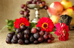Mazzo di uva matura su un fondo dei colori luminosi e dei vasi con le mele Fotografia Stock Libera da Diritti
