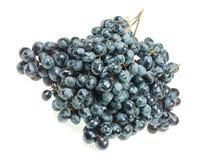 Mazzo di uva scura Immagini Stock Libere da Diritti