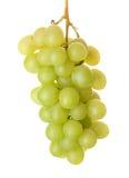 Mazzo di uva verde fresca immagini stock