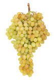 Mazzo di uva verde matura e succosa Fotografie Stock Libere da Diritti