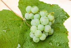 Mazzo di uva verde sulla foglia bagnata Fotografia Stock Libera da Diritti