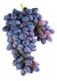 Mazzo di uva viola Fotografia Stock Libera da Diritti