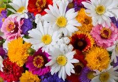 Mazzo di vari fiori di estate come fondo fotografia stock