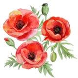 Mazzo di vettore dei fiori rossi del papavero dell'acquerello Fotografia Stock