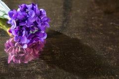 Mazzo di viole in un angolo dell'immagine Fotografie Stock Libere da Diritti