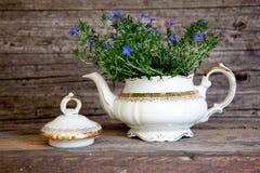 Mazzo di Violet Flowers in teiera bianca Fotografie Stock Libere da Diritti