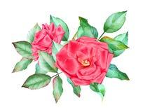 Mazzo disegnato a mano dell'acquerello delle rose rosse Immagine Stock Libera da Diritti