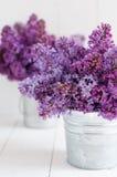 Mazzo due dei fiori lilla Fotografie Stock
