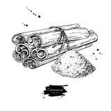 Mazzo e polvere legati del bastone di cannella Illustrazione di vettore Disegnato a mano Immagini Stock