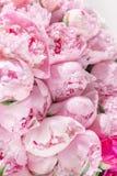 Mazzo elegante di molte peonie della fine rosa di colore su Bello fiore per qualsiasi festa Lotti di abbastanza e Fotografia Stock Libera da Diritti
