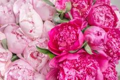 Mazzo elegante di molte peonie della fine rosa di colore su Bello fiore per qualsiasi festa Lotti di abbastanza e Immagini Stock Libere da Diritti