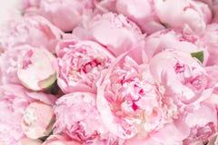 Mazzo elegante di molte peonie della fine rosa di colore su Bello fiore per qualsiasi festa Lotti di abbastanza e Immagine Stock Libera da Diritti
