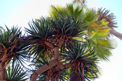 Mazzo esotico delle palme e dell'aloe Fotografie Stock