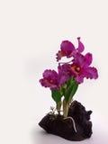 Mazzo floreale di plastica dei fiori su fondo bianco Fotografie Stock Libere da Diritti