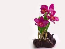 Mazzo floreale di plastica dei fiori su fondo bianco Immagine Stock