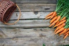Mazzo fresco delle carote su fondo di legno rustico Immagini Stock